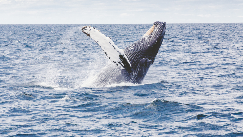 seattle humpback whale watching tours