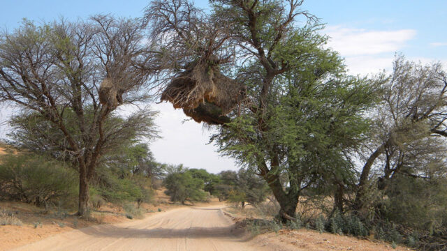 kgalagadi transfrontier park khomani cultural landscape